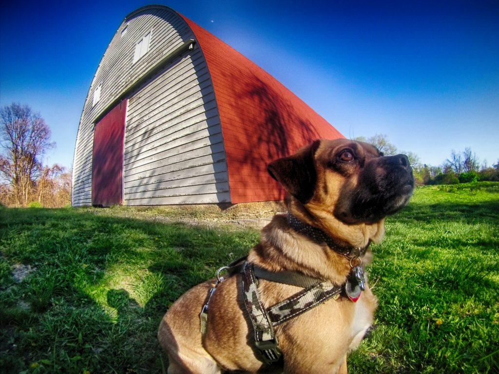 Dog sitting in front of a barn.