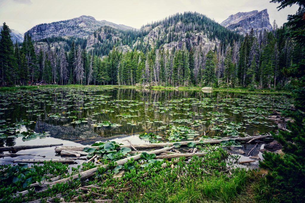 Nymph Lake on the Bear Lake Loop in Estes Park, Colorado