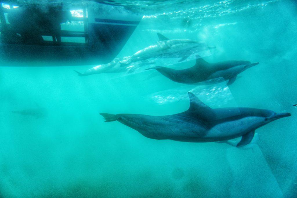 Laguna Beach Whale Watching Tour