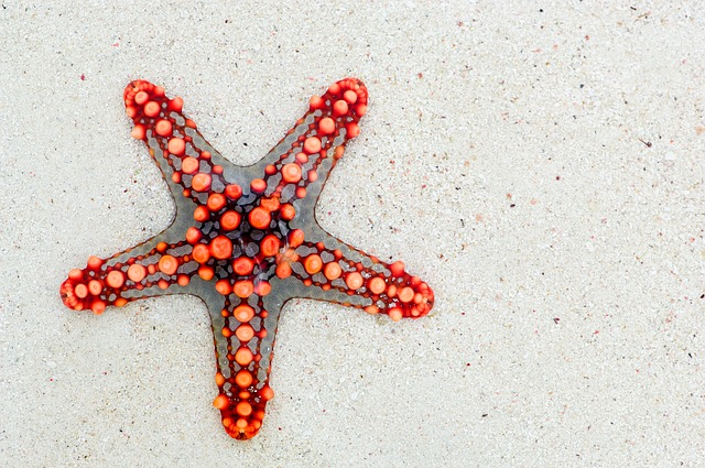 Red starfish on the beach - beach checklist, Tips for the Beach | Protect Where We Play | Ecotourism | Eco-friendly Travel