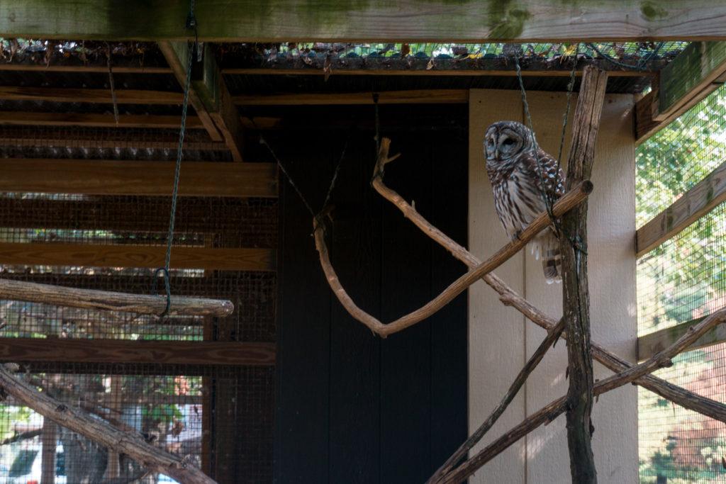 TreeHouse Wildlife Center