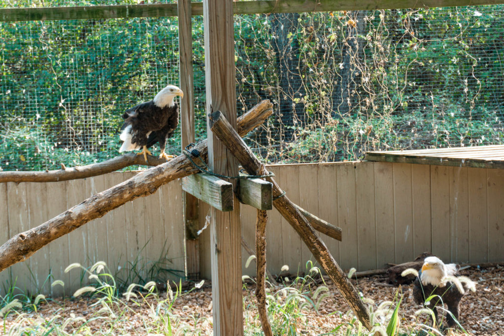 TreeHouse Wildlife Center in Elsah, a weekend getaway from St. Louis