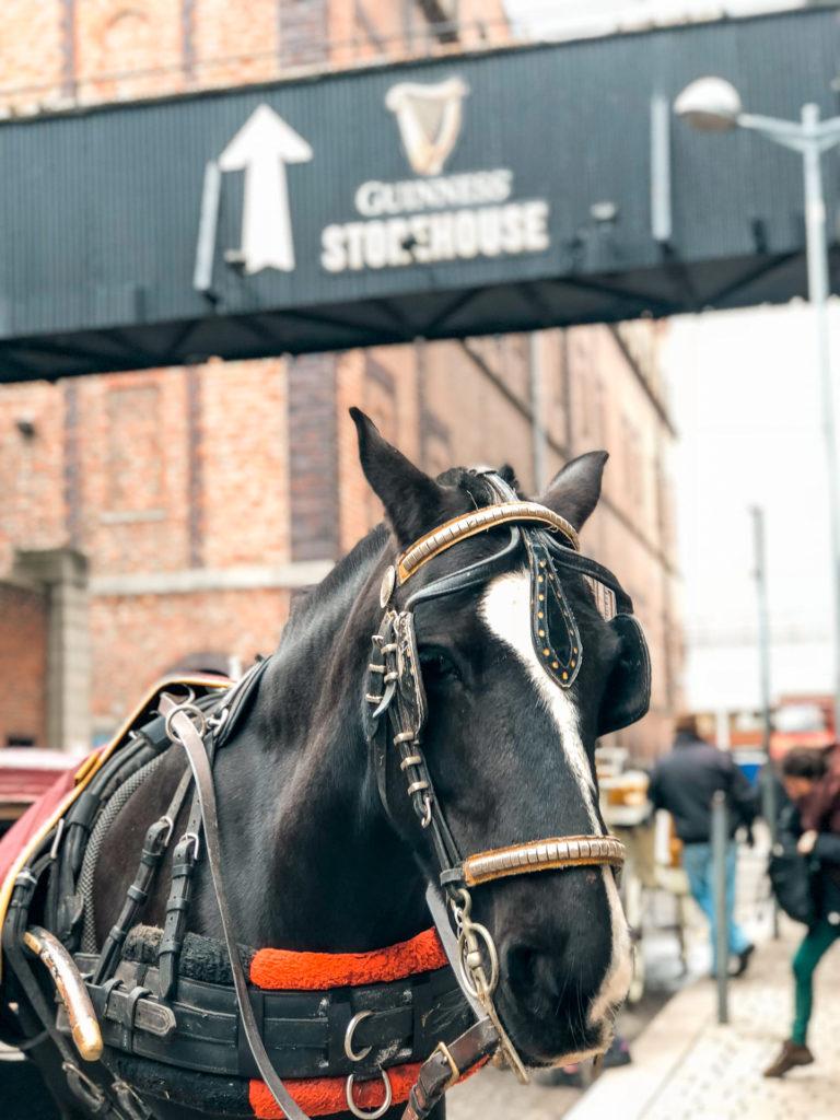 Dublin horse-drawn carriage ride.