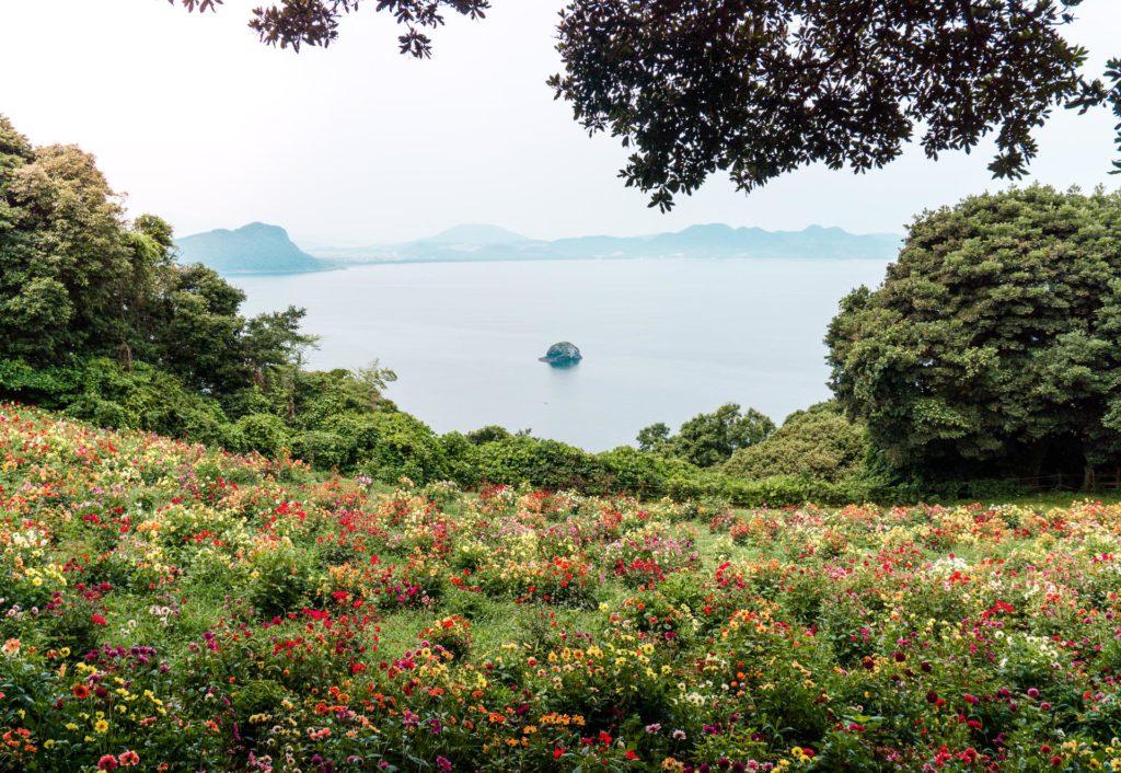 Field of wildflowers overlooking the ocean at Nokonoshima Island - Fukuoka