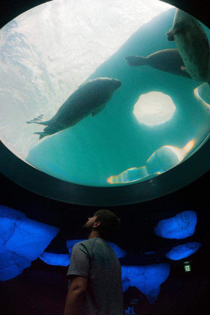 View of one of the aquarium features at Osaka Aquarium Kaiyukan in Osaka