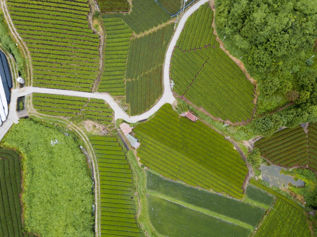 Aerial shot of wazuka tea farms in Nara, Japan (rows and rows of green tea).