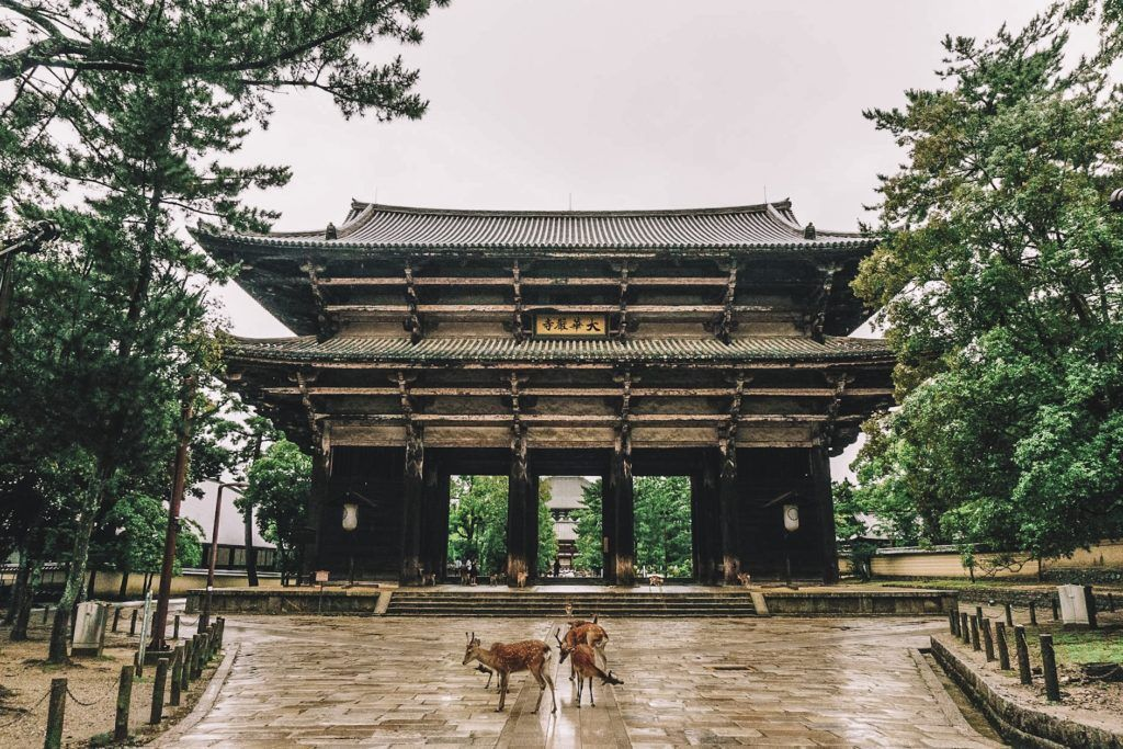 Deer in front of a wooden gate into a temple - Nara, Japan