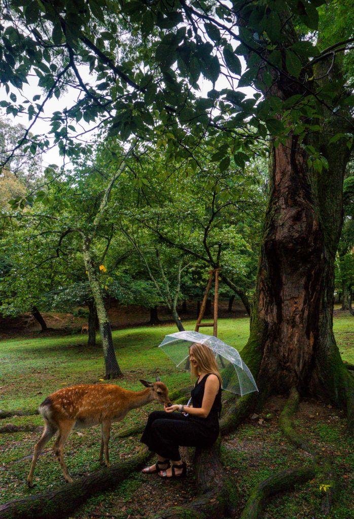 Girl feeding a small deer in Nara, Japan - Nara Itinerary or Day trip to Nara