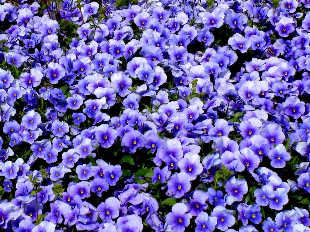 Flowers in Yokohama.
