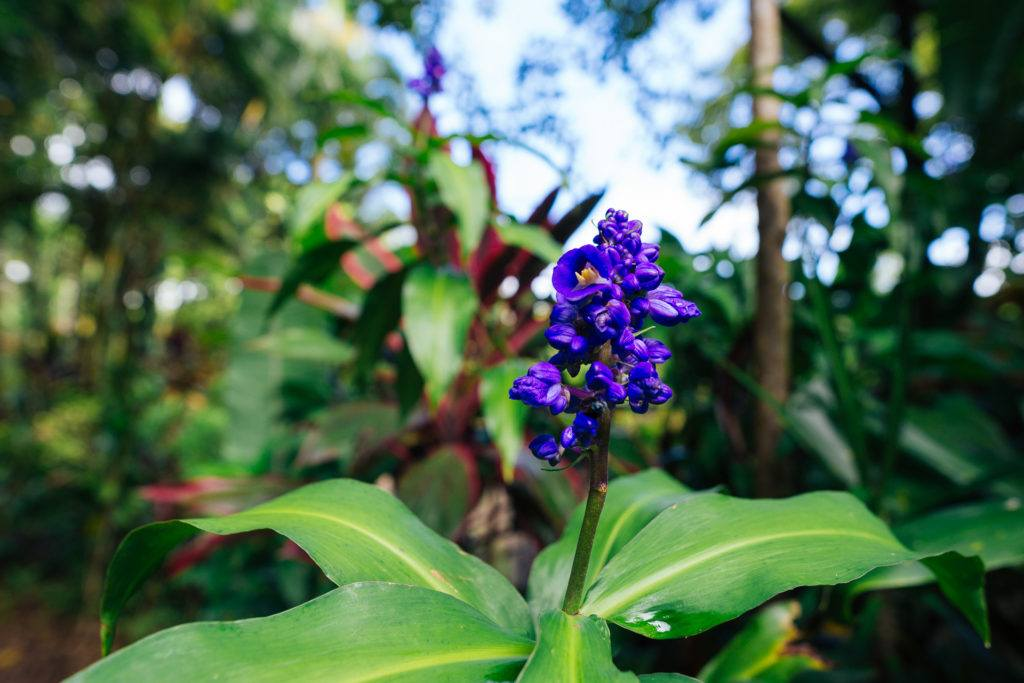 Beautiful flowers at Garden of Eden in Maui off the Road to Hana.