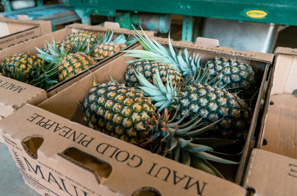 Maui Gold Pineapples boxed up at Maui Pineapple Tours.