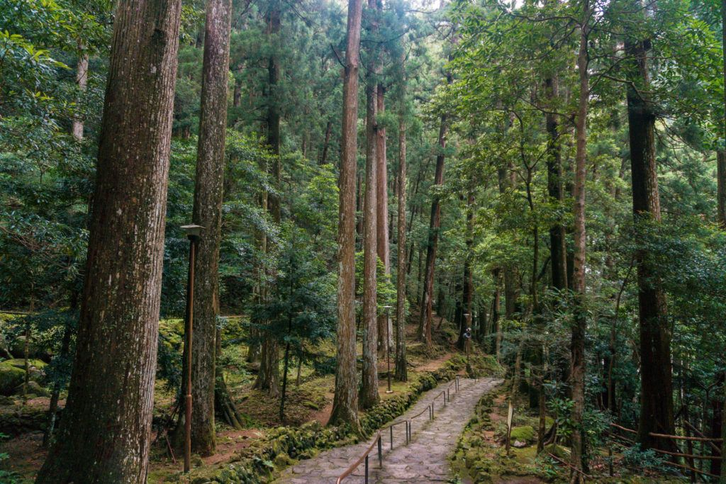 Daimonzaka on Kumano Kodo