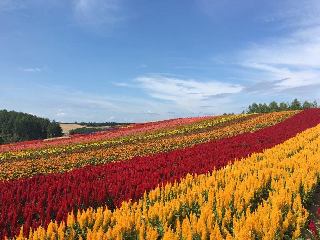 Zerubu no Oka - Hokkaido flower fields