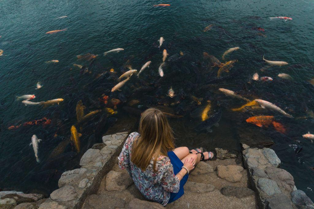 Koi fish at Shidokako Lake in Beppu, Japan